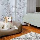 Schöner wohnen mit Hund