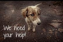 Animals in Need / The animals featured on this board need you! Sign petitions and repin them to help. / by iPetitions.com