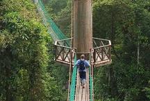 Paths, Rails & Bridges / by Sheryl