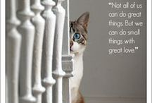 Animal Inspiration / All about the animals that inspire us daily / by iPetitions.com