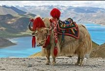 I want a Yak! / by Denise Haley