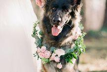 Pet-Friendly Weddings