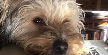 A Yorkshire Terrier in Italy / Effervescente - Effie for short - is our Yorkie, a rescue puppy found tied in a sack and left to drown in a sea drain on the Italian coast.  She enjoys pasta but loves cappuccino froth more.  Follow her adventures as she enjoys a dog's life in Italy.
