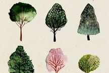 TREES / A collection of trees.
