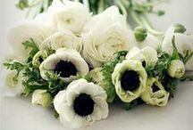 BEAUTIFUL FLORALS / Gorgeous florals that inspire.
