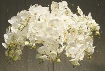 Flower arrangements / by Sureya Serret