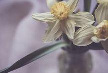Through My Eyes. My Photography. / My photography. / by Linda Hoye