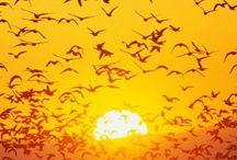 Memorable moments & nature / Unutulmaz anlar ve doga