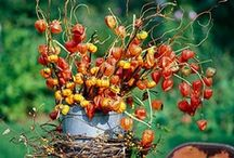 Autumn Splendor / Autumn is my favorite time of year.  I collect pumpkins and love fall decorations!  Friends have even given me pumpkins as Christmas gifts!  I think you can never have too many pumpkins.  These pins reflect the best time of year, autumn. / by Sharon Dennison