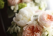 Old fashioned roses / Anything rosy but not modern, stiff or aloof!