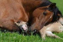 Horses / by Ruthann Burgess