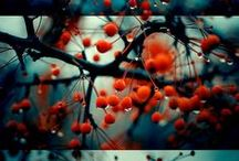 Beautiful photos