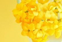 Cheery, yellow & sunshiny