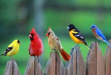 Flores & Pássaros / by Vania Negrao