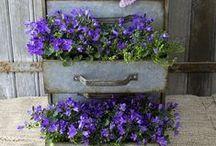 Gardening/ Outdoor Ideas / by Lyndsie Un