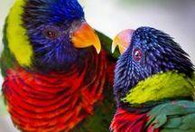 Animals - Birds / by Jennifer White