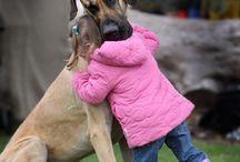 Koirat / Koirat