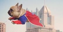 Frechie Fantastic / Dogs are superheroes too! Pets dressed up as your favorite superheroes.