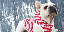 Fur Gear / Clothing and other wearables for your dogs.