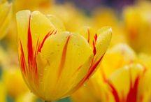 Flowers / by Denice
