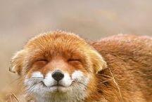 -FOX- / fox .. how wonderful live things