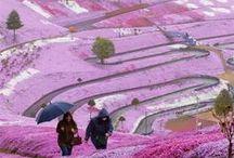 Japan || Travel / Du planst deine nächste Reise nach Japan? Dann bist du hier genau richtig! Finde hier die passenden Reisetipps und tolle Inspirationen für deinen Urlaub nach Japan! Ob Unterkünfte & Hotels oder Attraktionen hier wirst du bestimmt fündig!