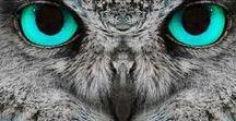 Owls ❤