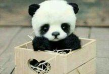 Cute stuff ❤