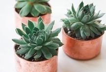 Plants / Adding plants to your urban household can help diversify good bacteria while cleansing the air of harmful toxins. Simply viewing plants can even help reduce stress levels.