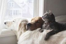 Pets - the best companions