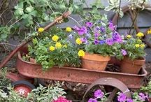 Flowers/ Gardening / by Jodezba