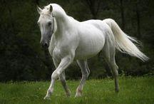 Horses / Beautiful, intelligent, loyal companions. / by Shinrin Art
