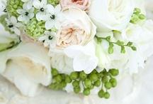 Wedding Imagination / by Stephanie Jourdan