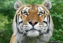 Wildlife / Wildlife rules! / by Shinrin Art