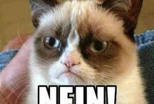 Grumpy Cat / I love Grumpy Cat. The memes are so relatable.