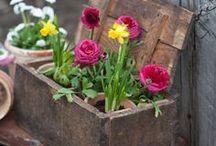 Outdoor spaces / Garden ideas / by Linda Salo