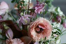 Flower insp.