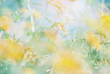 Lemon drops / Photos with shots of lemon or yellow - like rays of sunshine