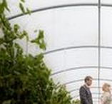 Vineyard Wedding Venues / A board full of vineyard wedding venues perfect for you to tie the knot in or host your wedding reception.