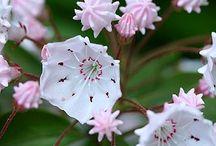 i love flowers!!! / by Megan McDaniel