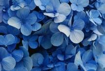 les fleurs / by Sophie Ryde