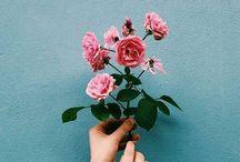 Flowers  ets…