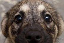 | PUPS | / We love puppies!