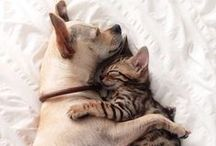 | PETS | / We love fur babies!
