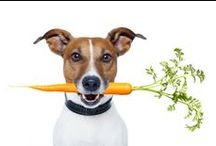 | PET NUTRITION | / Health and well-being is our way of life.  So are our pets. Biologically inappropriate sterile, cooked and processed foods are not meant to be naturally consumed by our pets.