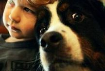 | WE HEART PETS | / Forever companions.
