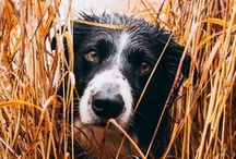 | FALL PETS | / Thrills and chills in the days of autumn.