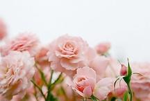 Virágözön..