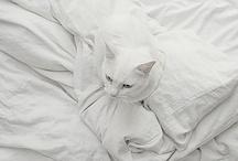 Fehér..
