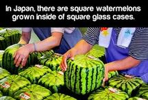 Interesting Facts / All of the most fun and Interesting facts from around the web. / by Fun Facts